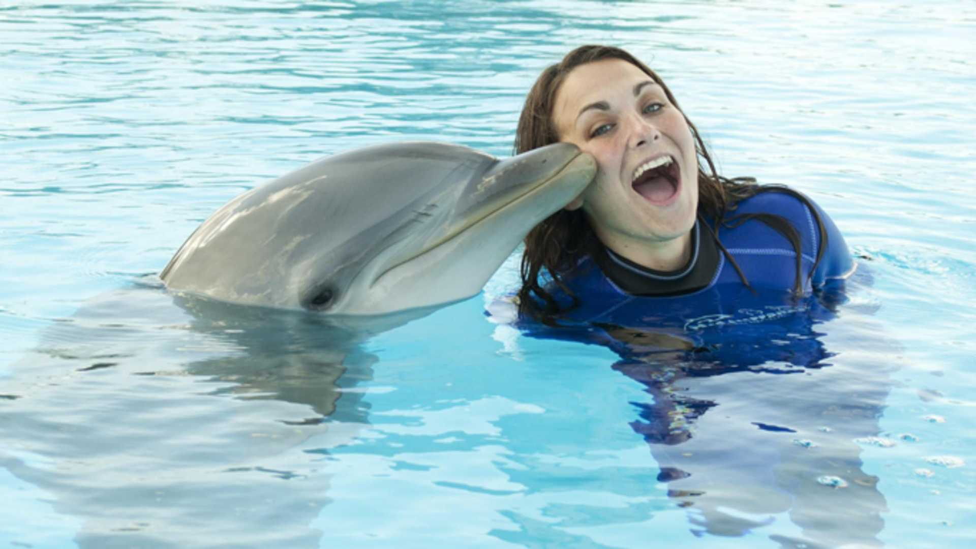 Swin with Dolphins